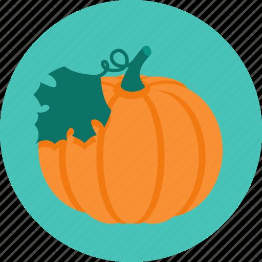 Food, pumpkin, vegetable icon - Download on Iconfinder