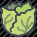 cabbage, farm, food, vegan, vegetable icon