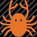crab, food, seafood