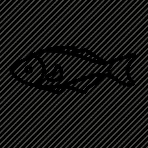 animal, fish, food icon