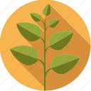 food, foodix, herb, ingredient, leaves, mint, plant icon