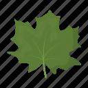leaf, maple, plant, tree icon