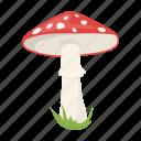 amanita, fly agaric, mushroom, plant, poisonous icon