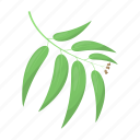 leaf, plant, tree, willow icon