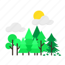 forestry, forrest, heterogen, mixed, pine, sun, trees