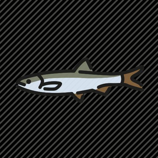 fish, fishes, fishing, freshwater, freshwater creature, sheresper icon