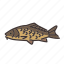 carp, fish, fishes, fishing, freshwater, freshwater creature icon