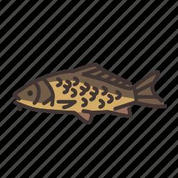 carp, fish, fishes, fishing, freshwater, freshwater creature icon