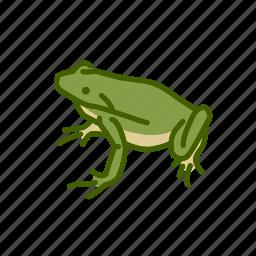 amphibian, animal, batrachia, freshwater, freshwater creature, frog icon