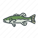 bass, fish, fishing, freshwater, spotted bass, sunfish icon