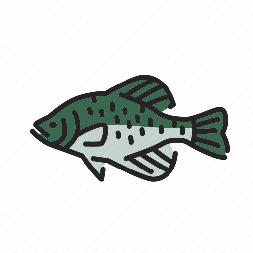 black crappie, crappie, fish, freshwater, freshwater fish, north america icon