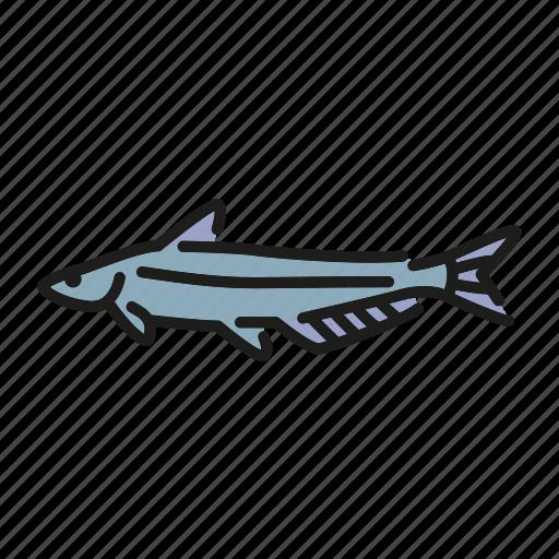 blue catfish, crappie, fish, freshwater, freshwater fish, north america icon