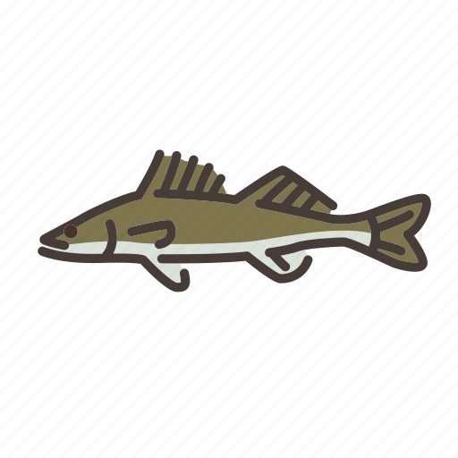 fish, fishes, fishing, freshwater, freshwater creature, walleye icon