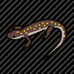 amphibian, animal, freshwater, freshwater creature, lizard, salamander icon