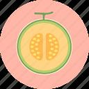 cantaloupe, food, fruit, honeydew melon, plant, seed icon