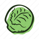 cabbage, field, food, garden, healthy, vegetable
