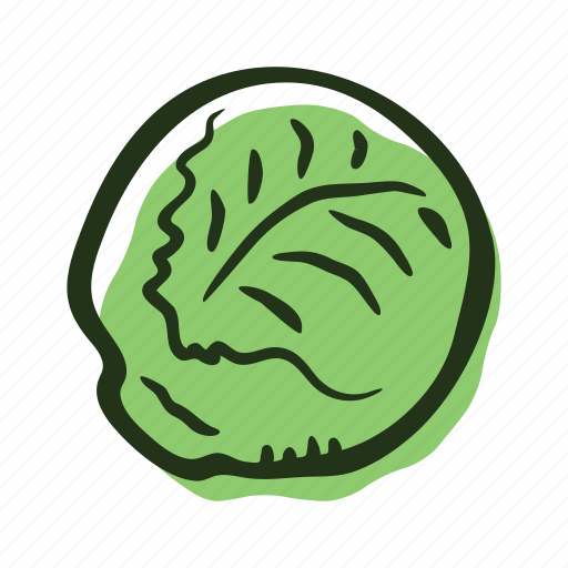 cabbage, field, food, garden, healthy, vegetable icon