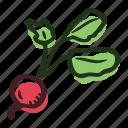 field, food, garden, healthy, radish, vegetable