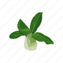 bok choy, raw vegan, salad, vegetable icon