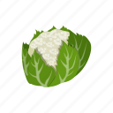 brassica, cauliflower, food, vegetable icon