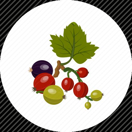 fruit, gooseberry icon