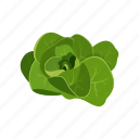 lettuce, raw vegan, salad, vegetable icon