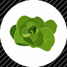 lettuce, raw vegan, salad, vegetable icon