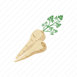 parsley, root icon