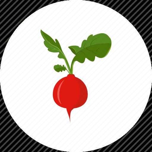 radish, salad, vegetable icon
