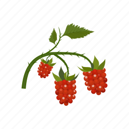 berry, fruit, raspberry icon
