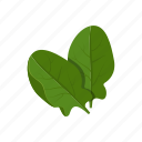spinach, vegetable icon