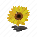 bees, seed, sunflower icon