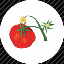 tomato, vegetable icon