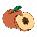 farm, food, fruit, hand drawn, orange, peach, peach pit icon