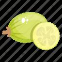 fruit, edible, fresh fruit, healthy food, kumquat, healthy diet icon