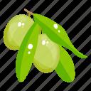 fruit, fresh fruit, edible, sour mango, healthy food, healthy diet icon