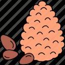 cedar, nut, seeds