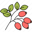 rosehip, vitamin, berries