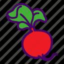 food, radish, vegetable