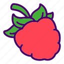 berry, food, raspberries, raspberry