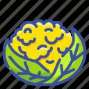 cauliflower, food, organic, vegetable, vegetarian icon