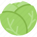 brusselsprouts, food, healthy, lettuce, organic, vegetable icon
