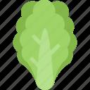 food, healthy, leaves, lettuce, organic, vegetable