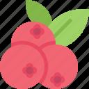 food, fruit, healthy, organic, raspberries
