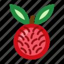 fruits, rambutan, rambutanfruit, sweet icon