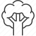 broccoli, cabbage, kale, cauliflower, vegetable, food, kitchen