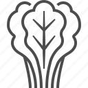 lettuce, daisy, salads, vegetable, food, kitchen