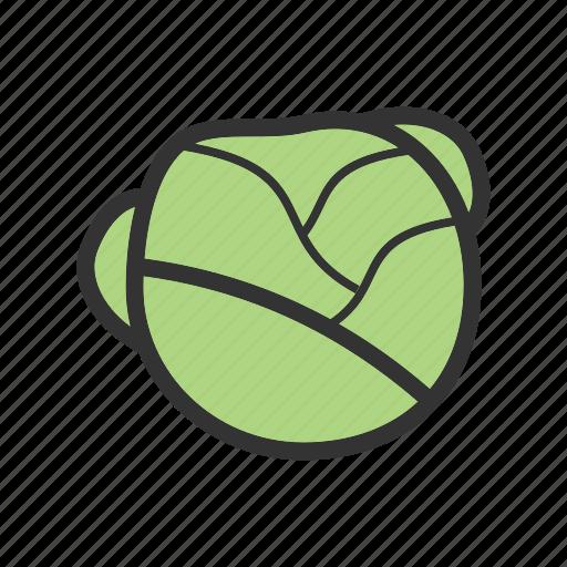 food, fresh, green, healthy, leaf, lettuce, salad icon