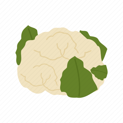 cauliflower, fresh, green, healthy, natural, vegetable, white icon