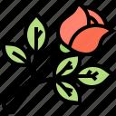 decoration, flora, flower, grief, roses